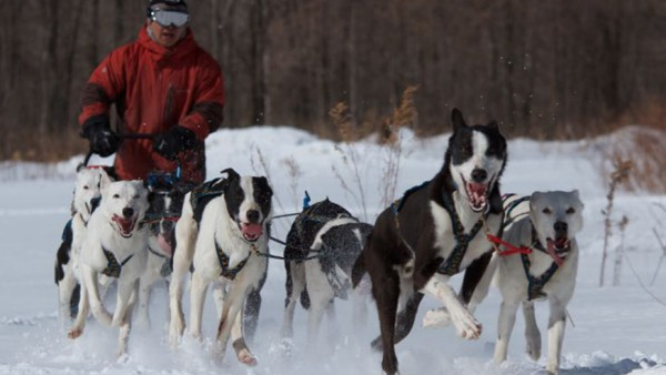 MUSHING WORKS(犬ぞり)
